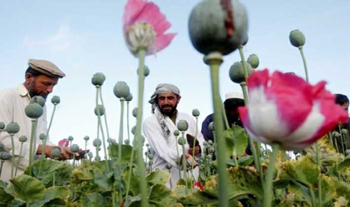 আফগানিস্তানে আফিম চাষ