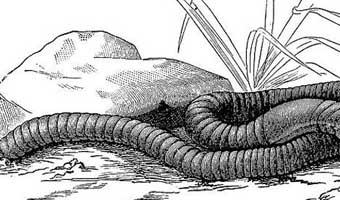 জগদানন্দ রায়ের বিজ্ঞানরচনা 'কেঁচো'